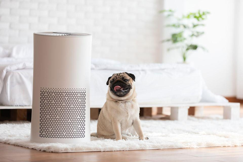 """<p>Air cleaning devices can help reduce some of the tiniest airborne particles, and as part of a comprehensive strategy, may help reduce indoor air pollution. However, they have limits. For example, <a href=""""https://www.goodhousekeeping.com/appliances/air-purifier-reviews/g22866172/best-air-purifiers/"""" rel=""""nofollow noopener"""" target=""""_blank"""" data-ylk=""""slk:air purifiers"""" class=""""link rapid-noclick-resp"""">air purifiers </a>aren't effective against gases or humidity. Larger, heavier particles — including many allergens — fall too quickly out of the air to be effectively removed this way. </p><p><strong>RELATED:</strong> <a href=""""https://www.goodhousekeeping.com/appliances/air-purifier-reviews/a25252001/do-air-purifiers-work/"""" rel=""""nofollow noopener"""" target=""""_blank"""" data-ylk=""""slk:Do Air Purifiers Actually Work?"""" class=""""link rapid-noclick-resp"""">Do Air Purifiers Actually Work?</a></p>"""
