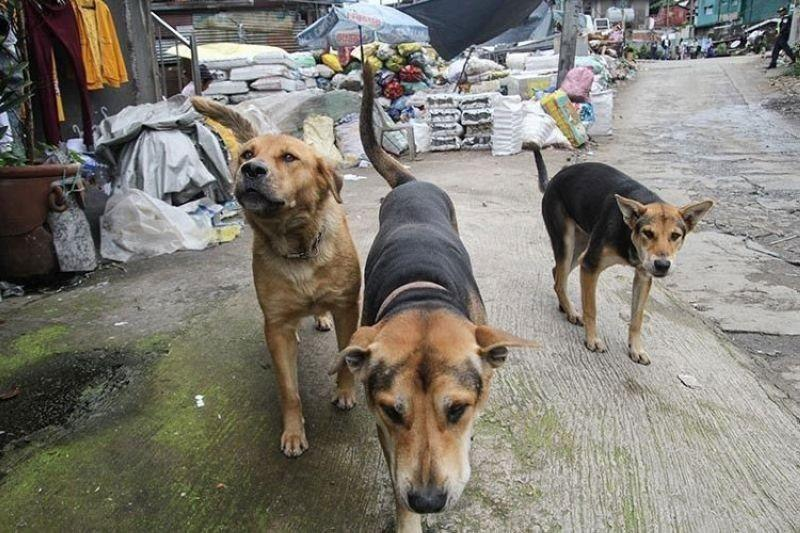 Pet owners urged to keep pets calm during New Year's Eve revelry