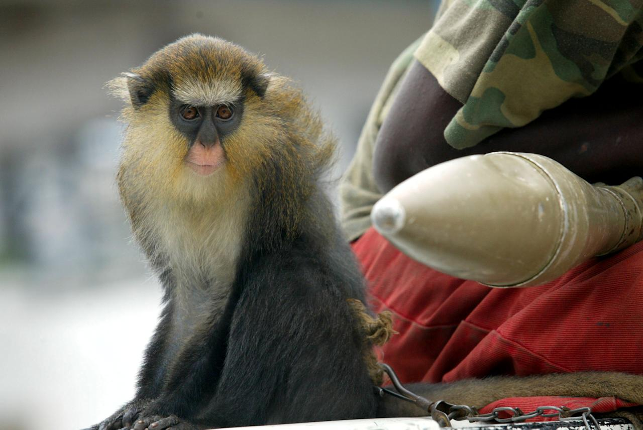 Rebel fighter patrols with a monkey at back of a truck during a visit by an American convoy from the U.S. embassy in Monrovia, which rolled into rebel territory, Monrovia, August 8, 2003. Liberia's rebels added tough new conditions on Friday for opening Monrovia's desperately needed port as aid workers ventured into rebel territory for the first time since fighting erupted in the capital last month. REUTERS/Juda Ngwenya PP03080053  JN/MA