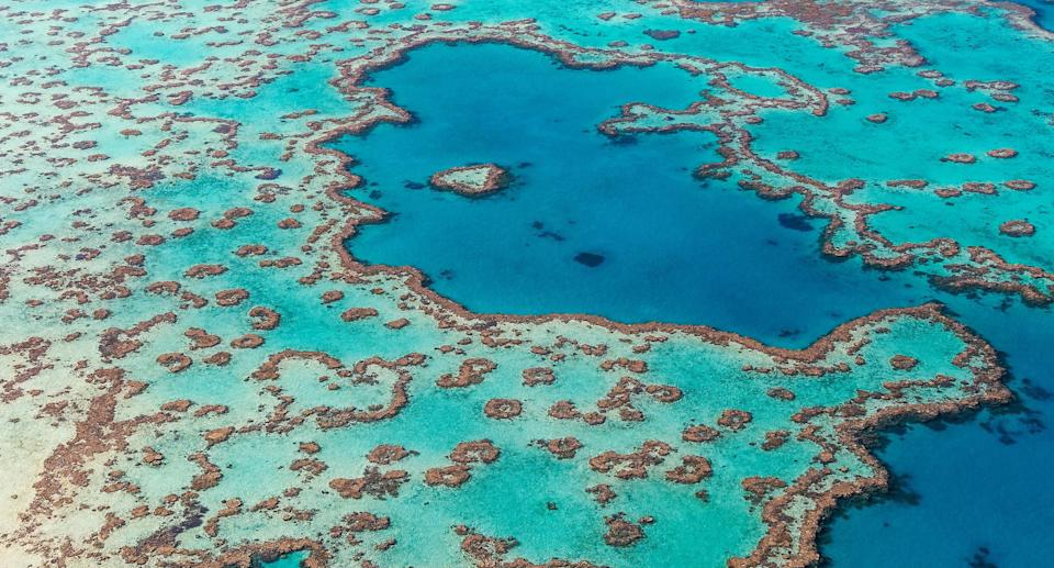 The man was bitten at Hardy Reef off Airlie Beach. Source: Getty