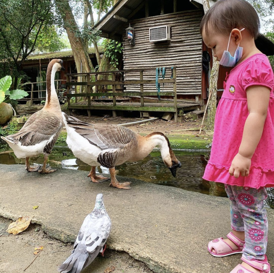 Getting up close with geese at The Animal Resort. (Photo: Instagram/@monsieur_cj)