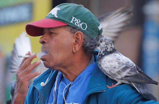 <p>A pigeon sits on the shoulder of a man as he smokes a cigarette in Sydney, Australia, May 11, 2017. (Photo: Jason Reed/Reuters) </p>