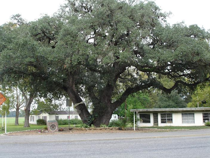 """The """"Hanging Tree"""" today in Columbus, Texas."""