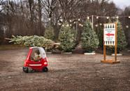 """<p>We'll never forget watching Clark Griswold (Chevy Chase) take his family out to see the Griswold family Christmas tree in 1989's<em> <a href=""""https://www.amazon.com/National-Lampoons-Christmas-Vacation-Chevy/dp/B009IU6BIS/"""" rel=""""nofollow noopener"""" target=""""_blank"""" data-ylk=""""slk:National Lampoon's Christmas Vacation"""" class=""""link rapid-noclick-resp"""">National Lampoon's Christmas Vacation</a></em>. Luckily, a trip to the best Christmas tree farm near you won't involve hiking through snow and getting frozen from the waist down. And if you forget to bring your saw like Chevy's character did in the <a href=""""https://www.goodhousekeeping.com/holidays/christmas-ideas/g1315/best-christmas-movies/"""" rel=""""nofollow noopener"""" target=""""_blank"""" data-ylk=""""slk:classic Christmas movie"""" class=""""link rapid-noclick-resp"""">classic Christmas movie</a>, don't stress. Many of these spots provide saws, chop your tree for you, or even offer pre-cut Christmas trees. And if you're lucky, some even offer free food and festive winter activities to enjoy during your visit. </p><p>From the mountains, to the prairies, to the oceans, many Americans are searching for the perfect <a href=""""https://www.goodhousekeeping.com/holidays/christmas-ideas/g1863/fake-christmas-trees/"""" rel=""""nofollow noopener"""" target=""""_blank"""" data-ylk=""""slk:Christmas tree"""" class=""""link rapid-noclick-resp"""">Christmas tree</a> to kick off the winter season. Whether you've already pulled your <a href=""""https://www.goodhousekeeping.com/holidays/christmas-ideas/g2747/christmas-tree-decorations-ideas/"""" rel=""""nofollow noopener"""" target=""""_blank"""" data-ylk=""""slk:ornaments"""" class=""""link rapid-noclick-resp"""">ornaments</a> out of <a href=""""https://www.goodhousekeeping.com/holidays/christmas-ideas/g3086/christmas-tree-ornament-organization/"""" rel=""""nofollow noopener"""" target=""""_blank"""" data-ylk=""""slk:storage"""" class=""""link rapid-noclick-resp"""">storage</a>, or have no clue where to start, we've mapped out the best Christmas tree farms in every state. See which one is n"""