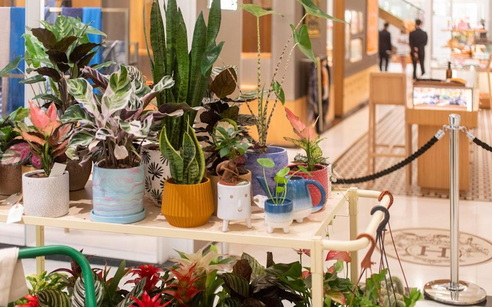 """The garden centre is filled with a hand-curated collection of greenery to fill your plot """"in the most utterly stylish way imaginable"""" - Rii Schroer"""