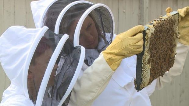 Evan Fedun, left, and his mom, Tarra Stevens, check on their urban beehive in Airdrie. (Helen Pike/CBC - image credit)