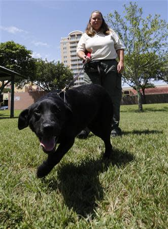 U.S. Department of Agriculture training specialist Jodi Daugherty walks with 'Bear', a dog trained to detect the Giant African Land Snail, at a news conference about successes in attempts to eradicate the pest in Miami, Florida August 29, 2013. REUTERS/Joe Skipper