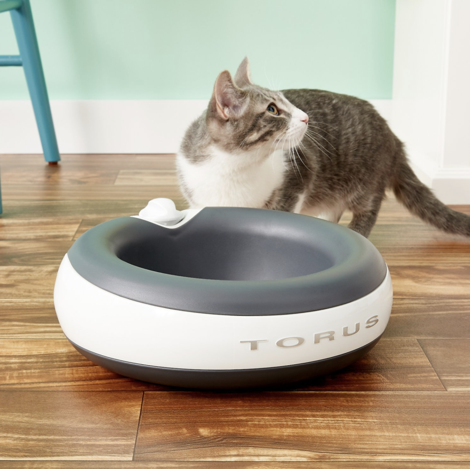 Keep your kitty hydrated and happy. The Torus delivers water the way she likes it. (Photo: Chewy)