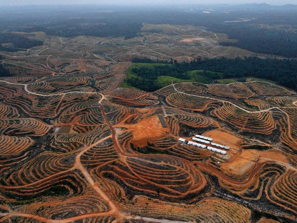 Tropical deforestation accounts for 8% of human-caused carbon emissionsAFP