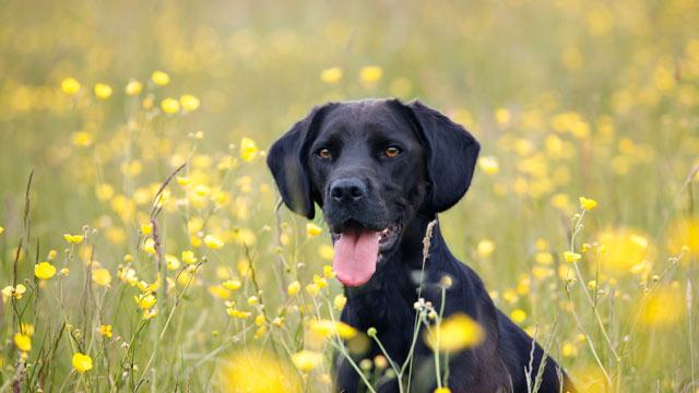 Allergies: How Pollen is Affecting Your Pet