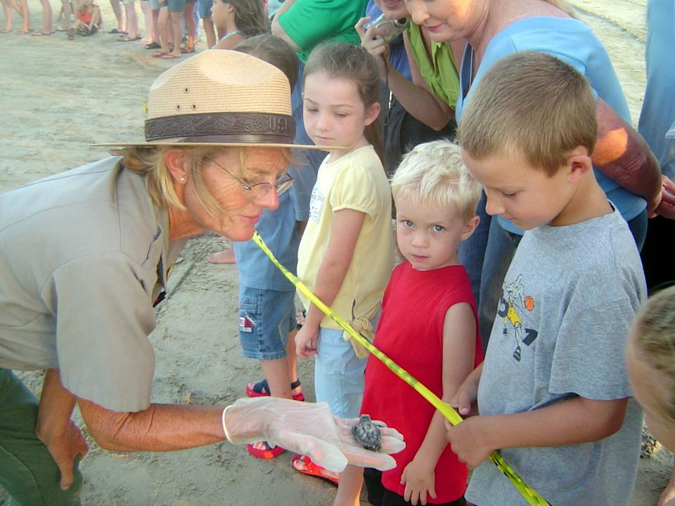 "The average size of a sea turtle hatchling can be seen in this ranger's hand. <span class=""copyright"">(National Park Service)</span>"