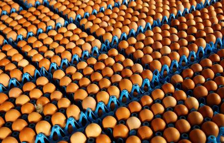 FILE PHOTO: Eggs are packed to be sold at a poultry farm in Wortel