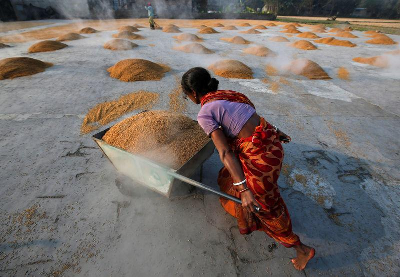 A worker carries boiled rice in a wheelbarrow for drying at a rice mill on the outskirts of Kolkata