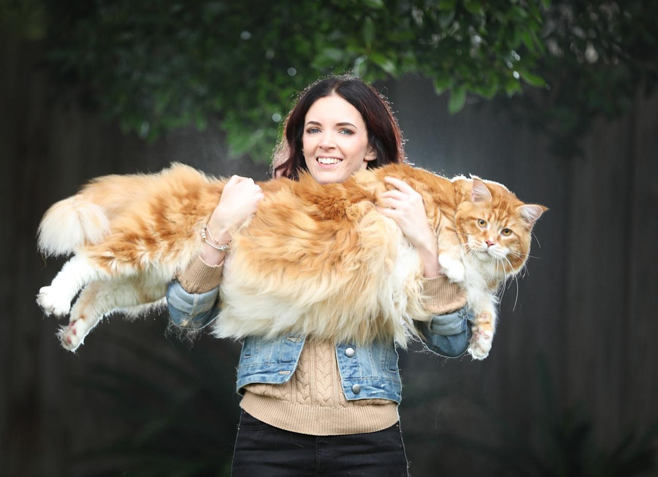 <p>'Omar' the Maine Coon cat with owner Stephy Hirst, who might be the longest in the world. (Rex features) </p>