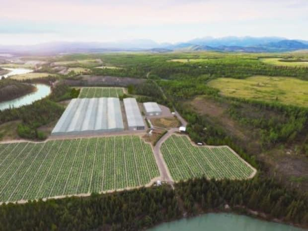 An artist's rendering of ArcticPharm's cannabis farm north of Whitehorse. The company hopes to start growing as soon as it can get seeds in the ground, but it may be another year before any retail product is available. (ArcticPharm - image credit)