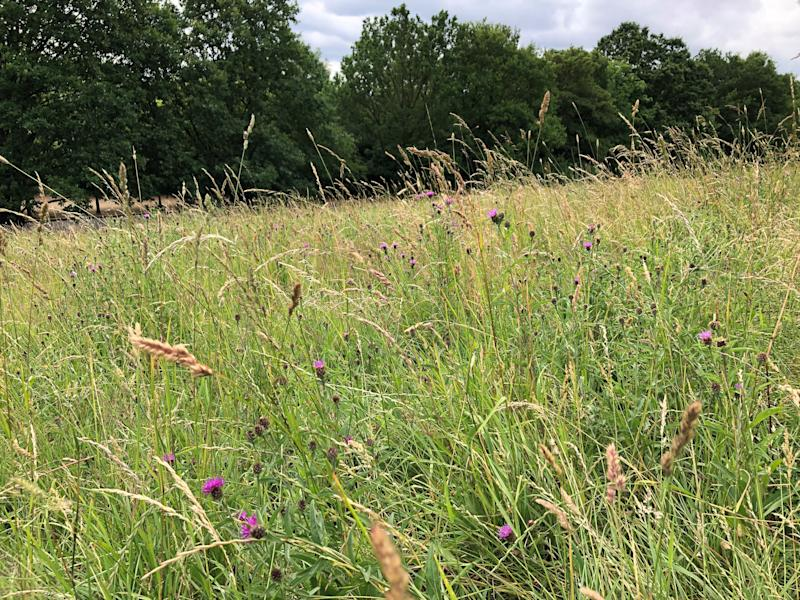 Wild areas in urban parks can create habitat for insects such as grasshoppers and butterflies