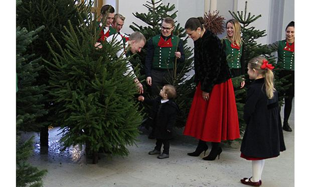 Prince Oscar welcomes Christmas trees to the royal palace
