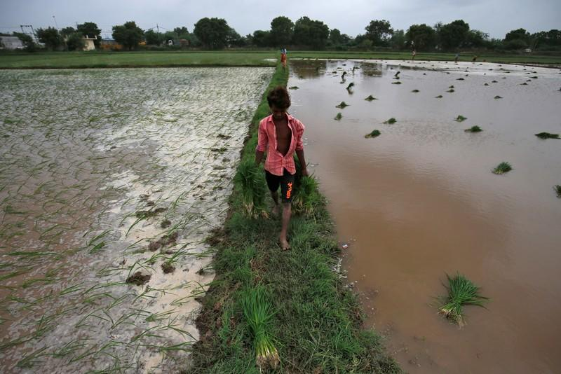 India rice export prices slide to multi-year low on supply influx