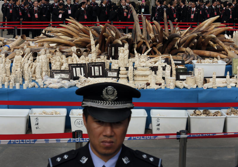 FILE - In this Monday, Jan. 6, 2014 file photo, a customs officer stands guard in front of confiscated ivory before its destruction in Dongguan, southern Guangdong province, China. The United Nations Environmental Program (UNEP) is marking the U.N.'s first ever World Wildlife Day Monday, March 3, 2014 to raise awareness about an illicit global trade in illegal timber, elephant ivory and rhino horns worth an estimated $19 billion. (AP Photo/Vincent Yu, File)