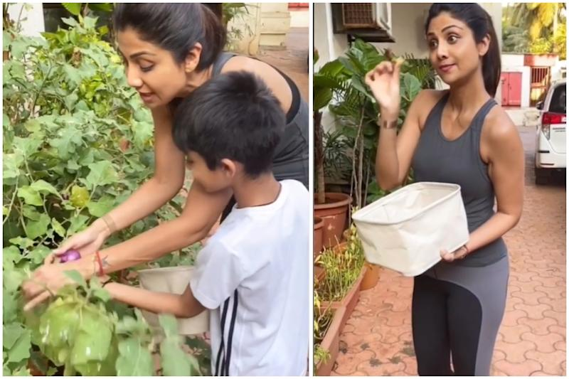 Shilpa Shetty and Son Viaan Pluck Brinjals and Chillies from Their Garden to Make Baingan Bharta