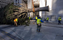 The 2020 Rockefeller Center Christmas tree, a 75-foot tall Norway spruce that was acquired in Oneonta, N.Y., is lifted while being prepared for setting on a platform at Rockefeller Center Saturday, Nov. 14, 2020, in New York. (AP Photo/Craig Ruttle)