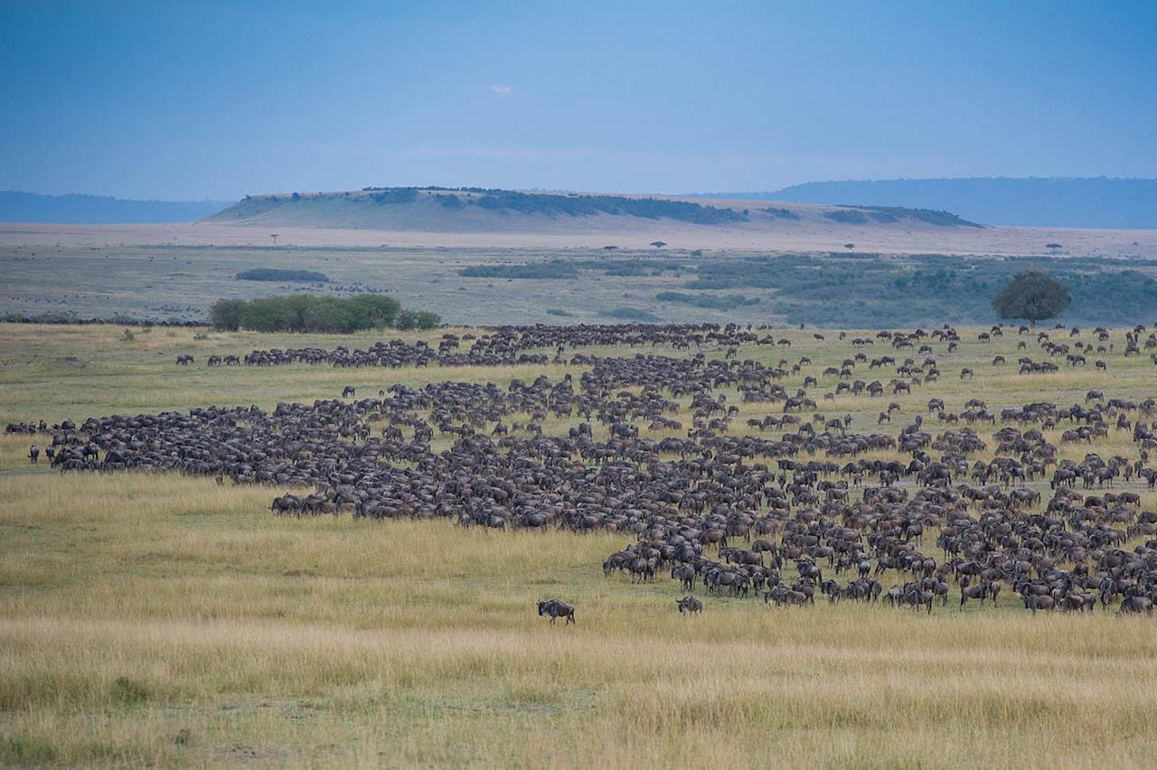 <p>The ground is thick with thousands of the beasts. (Photo: Ingo Gerlach/Caters News) </p>