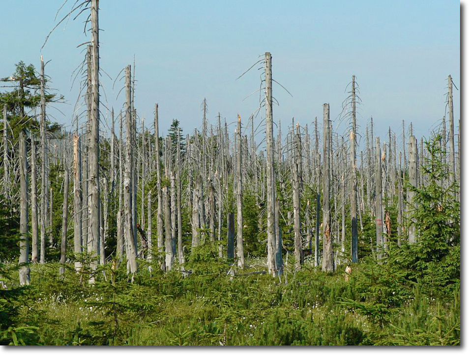 Bare tree trunks rise above a vegetated forest floor