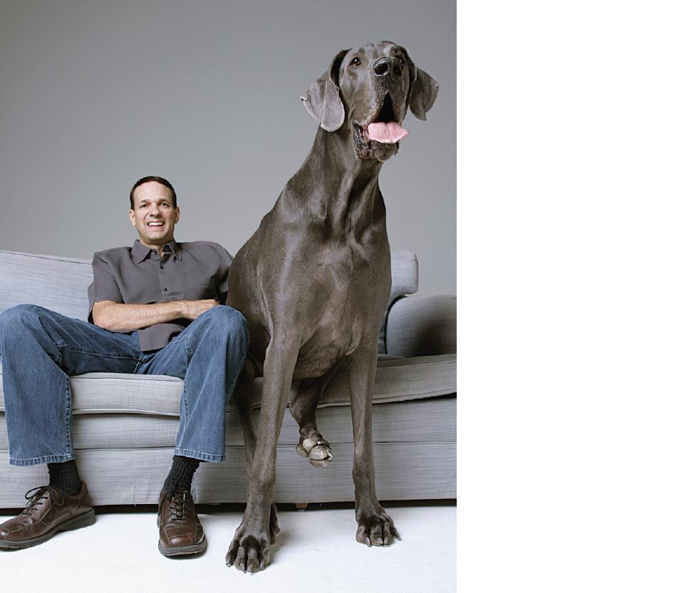 George sits on the couch with owner Dave Nasser. Dave