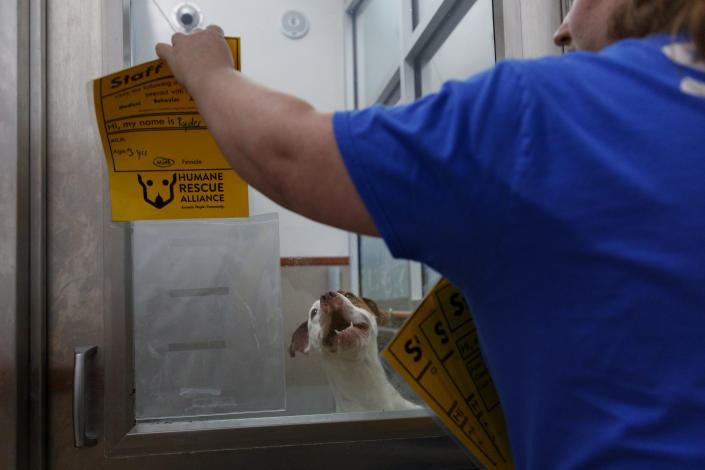 <p>Ryder, a three-year old mixed breed dog looks out from an enclosure at Humane Rescue Alliance in Washington, Tuesday, Sept. 11, 2018. Ryder is on of as 26 cats and dogs that arrived in Washington from Norfolk Animal Care and Control of Norfolk, Va., in advance of Hurricane Florence. People aren't the only ones evacuating to get out of the path of Hurricane Florence. The dogs and cats will all be available for adoption. (Photo: Carolyn Kaster/AP) </p>