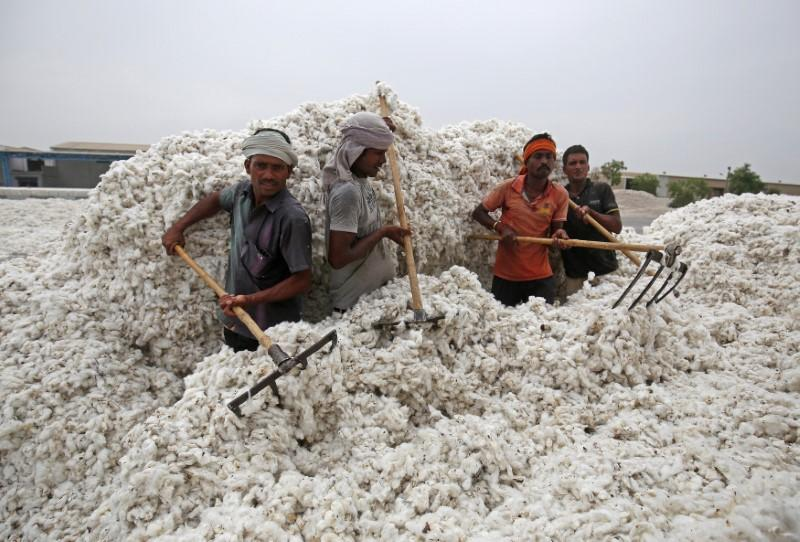 FILE PHOTO: Employees unload cotton from a truck at a cotton processing unit in Kadi town, in the western Indian state of Gujarat