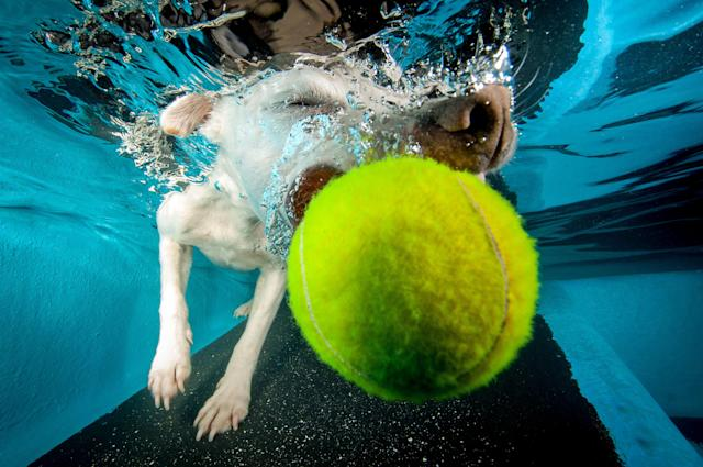 <p>The Jack Russell-whippet cross almost catches the ball. (Photo: Jonny Simpson-Lee/Caters News) </p>