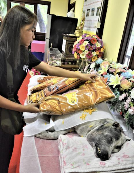 Inside the Bangkok temple where dogs are given human funeral ceremonies to speed their rebirth