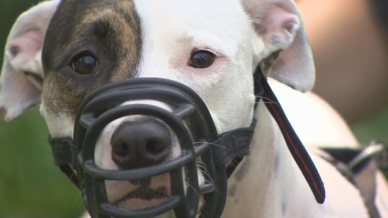 Dog owners protest Quebec's decision to eventually ban pit bulls