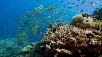 """Australia will strongly oppose a UNESCO plan to list the Great Barrier Reef as """"in danger"""""""