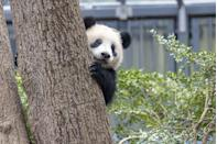 """<p>Looking for something to spark some joy? Why not tune into Edinburgh Zoo's 'Panda Cam' and see what the furry creatures are up to. </p><p><a class=""""link rapid-noclick-resp"""" href=""""https://www.edinburghzoo.org.uk/webcams/panda-cam/"""" rel=""""nofollow noopener"""" target=""""_blank"""" data-ylk=""""slk:WATCH NOW"""">WATCH NOW</a> </p>"""