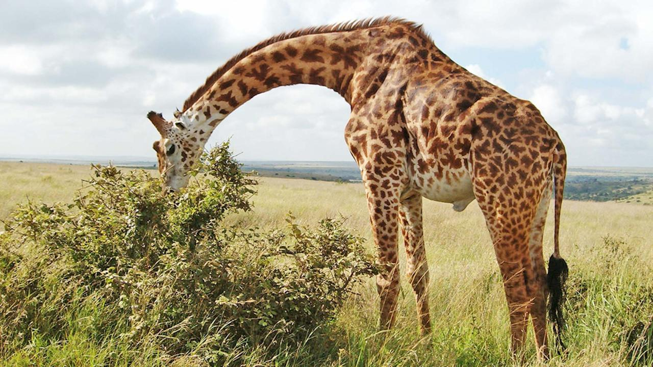 <p>Kenya is one of the top emerging travel destinations for 2019 according to TripAdvisor. Here's your chance to check it off the list. Fly from Mumbai on Friday, February 1 with fares starting from Rs 11,709 and return on Sunday, February 10 with fares starting from Rs 11,709. <br />Photograph: Wikimedia Commons </p>