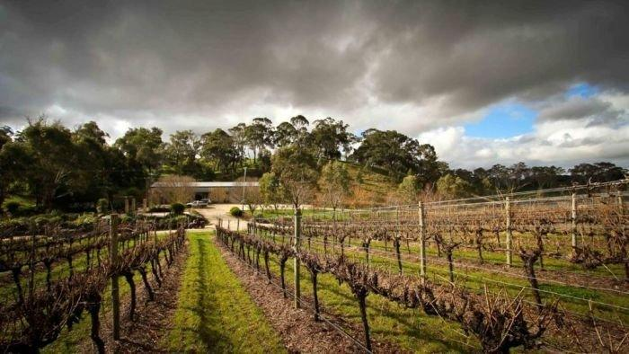 Review looks to boost wine industry fortunes