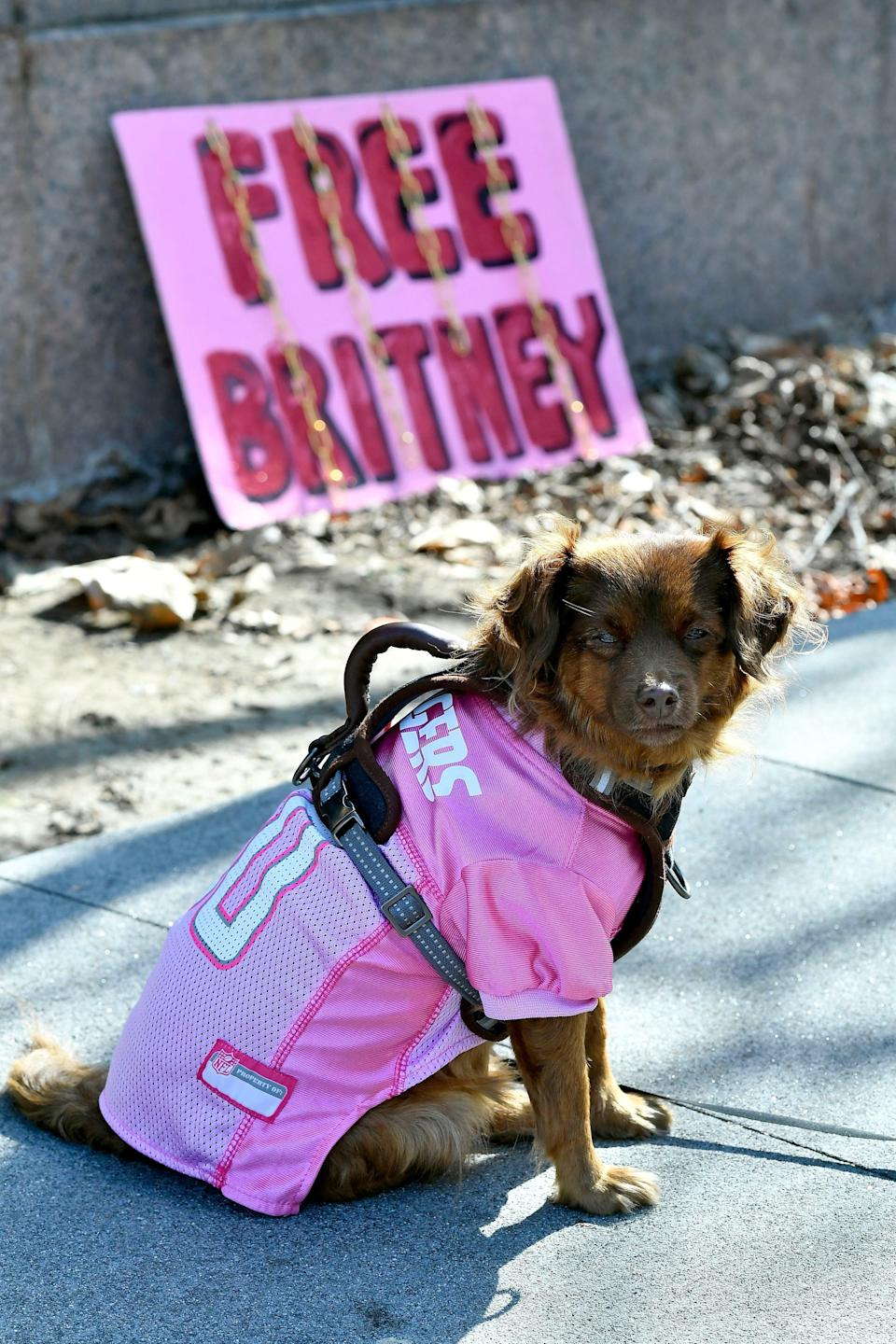 Supporters, including this dog, have been supportng the singer in her bdid to have her father removed as her conservatorGetty Images
