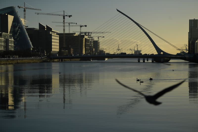 FILE PHOTO: Swans swim in the river Liffey in the financial district of Dublin