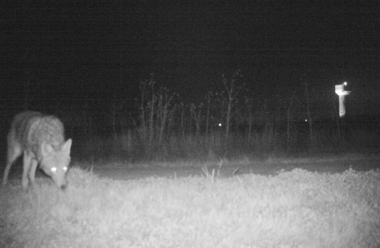 Wildlife: There were some actual animals spotted on the cameras (Facebook/Gardner Police Department)