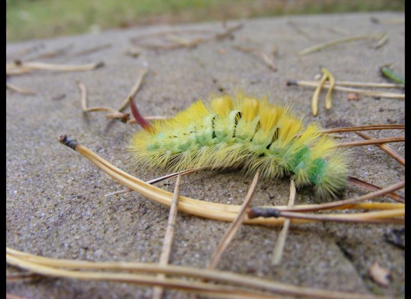 "A dieting woman found a <a href=""http://www.dailymail.co.uk/news/article-2008450/Dieter-finds-live-caterpillar-Weight-Watchers-snack.html?ITO=1490"" target=""_hplink"">live caterpillar crawling on a Weight Watchers-brand slice of packaged cake</a> in June 2011. She called it gross enough to put her off of cake forever."
