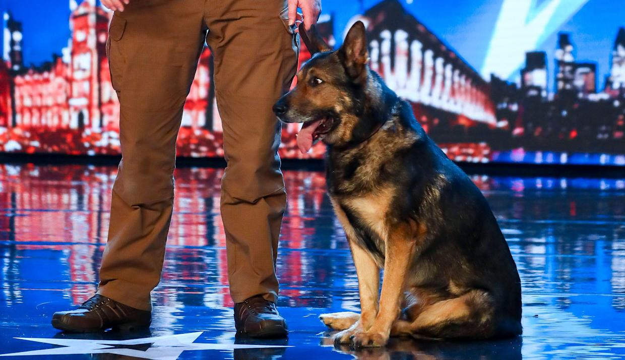 Britain's Got Talent' police dog magic act Dave and Finn branded a