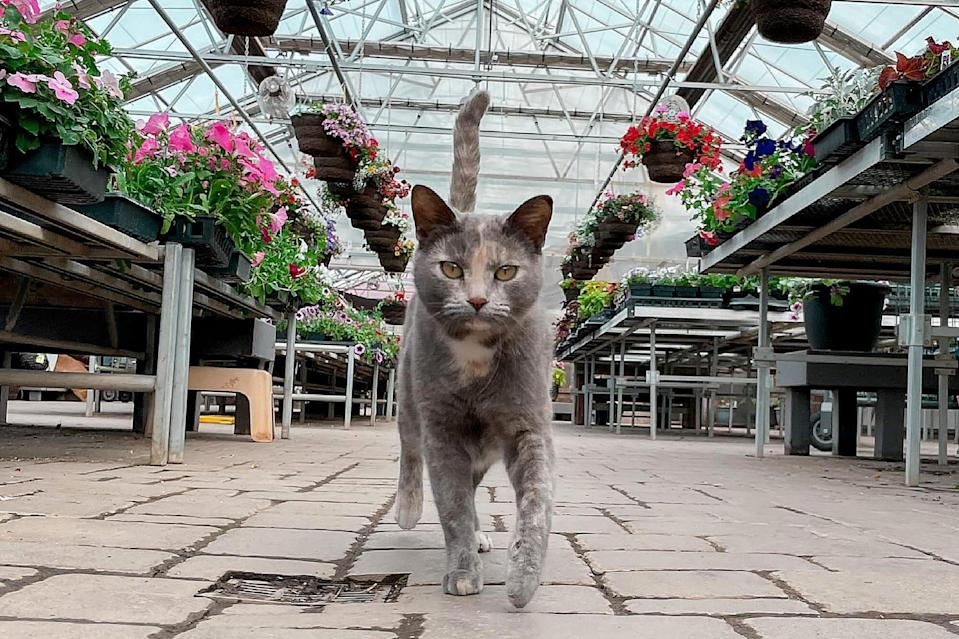 Cats in Greenhouses