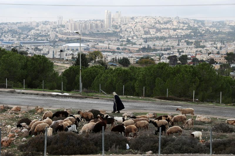 "FILE PHOTO: Cattle graze as a man walks by in ""Givat Hamatos"", an area near East Jerusalem"