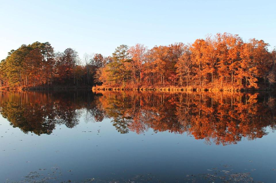 """<p><strong>Where to go: </strong>Tombigbee State Park in Tupelo hosts the headquarters of the Natchez Trace Parkway, a 444-mile recreational road with picturesque hiking trails and a rainbow of changing hardwoods. </p><p><strong>When to go: </strong><a href=""""https://www.nps.gov/natr/planyourvisit/fall-colors.htm"""" rel=""""nofollow noopener"""" target=""""_blank"""" data-ylk=""""slk:Mid- or Late November"""" class=""""link rapid-noclick-resp"""">Mid- or Late November</a></p><p><a class=""""link rapid-noclick-resp"""" href=""""https://go.redirectingat.com?id=74968X1596630&url=https%3A%2F%2Fwww.tripadvisor.com%2FHotels-g60746-Tupelo_Mississippi-Hotels.html&sref=https%3A%2F%2Fwww.redbookmag.com%2Flife%2Fg34045856%2Ffall-colors%2F"""" rel=""""nofollow noopener"""" target=""""_blank"""" data-ylk=""""slk:FIND A HOTEL"""">FIND A HOTEL</a></p>"""
