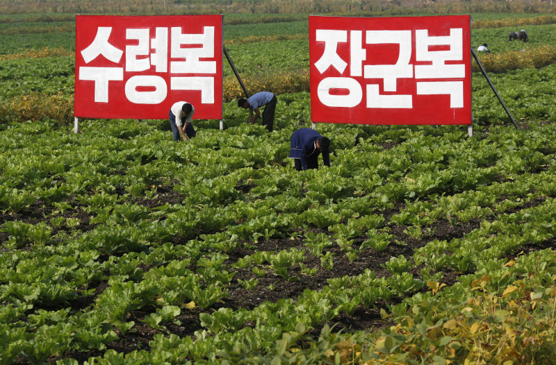 """In this Sunday, Sept. 23, 2012 photo, North Korean farmers work at Migok Cooperative Farm in Sariwon, North Hwanghae Province, North Korea. Farmers would be able to keep a bigger share of their crops under proposed changes aiming to boost production by North Korea's collective farms, which have chronically struggled to provide enough food for the country's 24 million people. The signs read """"Fortune of holding great leader (Kim Il Sung) as father,"""" left, and """"Fortune of holding great general (Kim Jong Il) as father."""" (AP Photo/Vincent Yu)"""