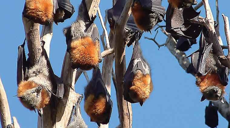 Tripura sounds alert on Nipah virus