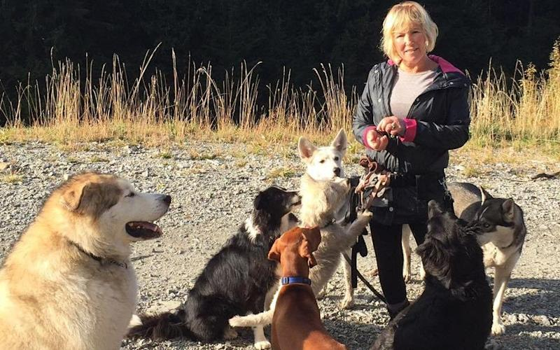 Canadian dog walker, Annette Poitras, could not have survived over two days in the wilderness without the help of her dogs - Coquitlam Search and Rescue