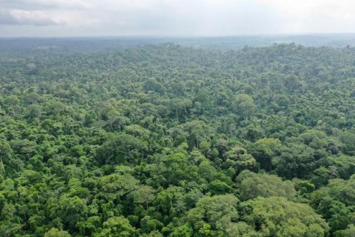 A report issued earlier this week said massive reforestation might help fight climate change (AFP Photo/Moise GOMIS)