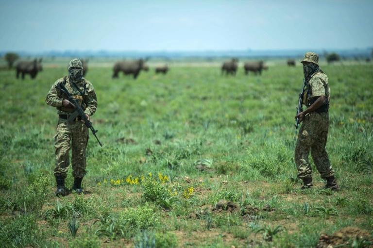 Experts say the fight against poachers has become like a war